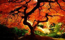 autumn-equinox-1024x640